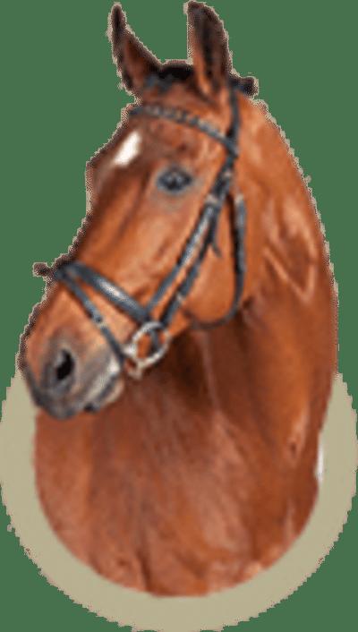 Pferdekremierung von De Breborgh
